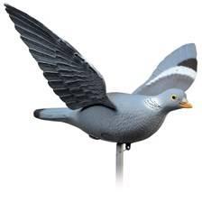 Appelant januel ramier ailes battantes