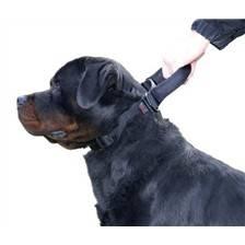 Collier chien reglable martin sellier intervention