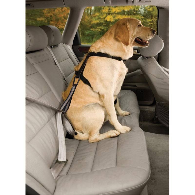 Sangle De Protection Kurgo Seatbelt